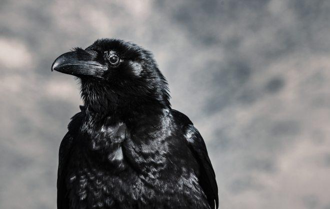 animal-beak-bird-946344.jpg
